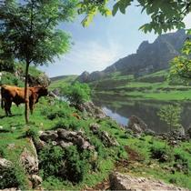 los-lagos-de-covadonga-picos-de-europa