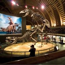 ruta-de-los-dinosaurios-muja
