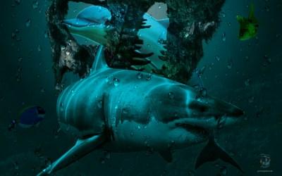 Underwater #MadeWithPicsArt