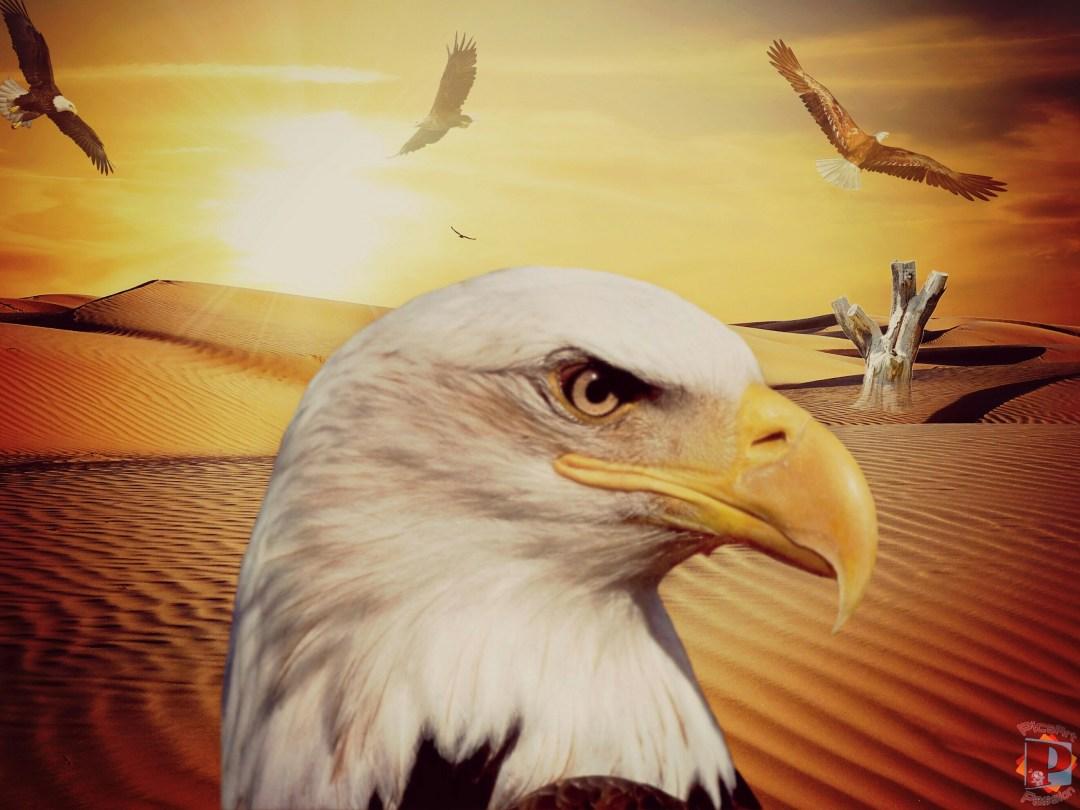 Eagle Colour #MadeWithPicsArt