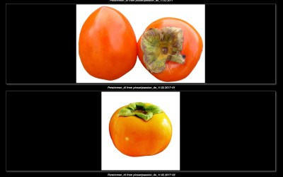 Persimmon #1  – png / isolated – kostenloser download