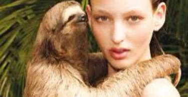 Wisper Sloth Meme