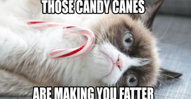 Those Candy Canes Are Making You Grumpy Cat Memes