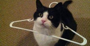 Human i request your assistance Pet Meme
