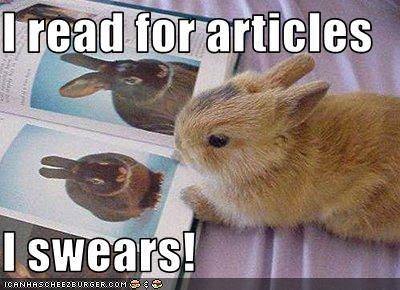 Rabbit Meme I read for articles i swears