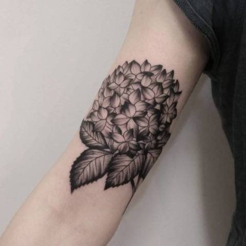 Hydrangea Tattoos And Hydrangea Tattoo For Boys & Girls 12