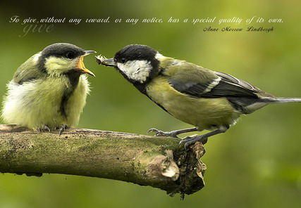 Birds Quotes Images 01