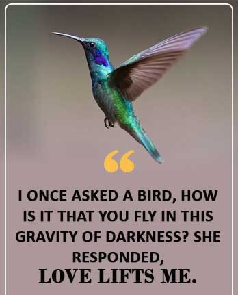 Birds Quotes Images 06