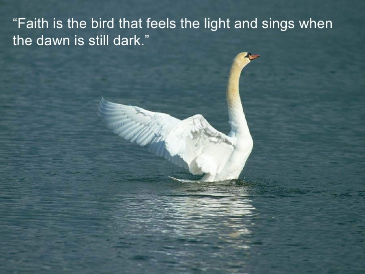 Birds Quotes Images 07