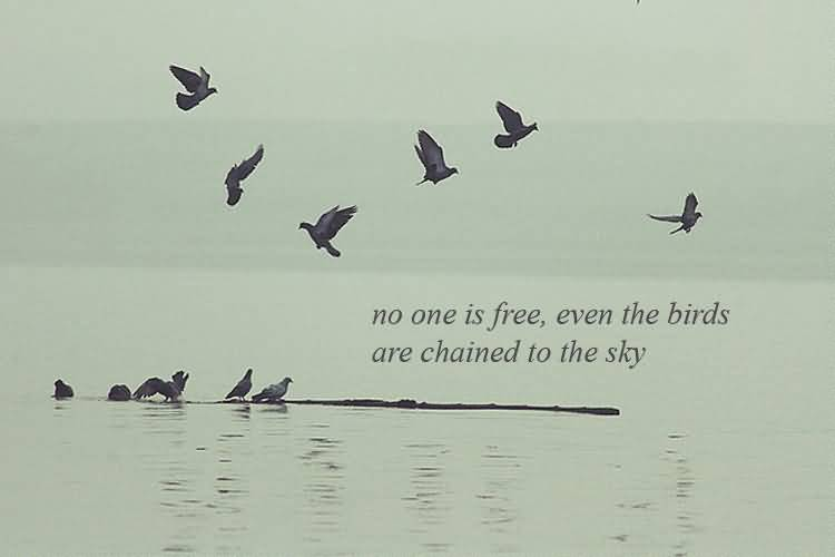 Birds Quotes Images 08