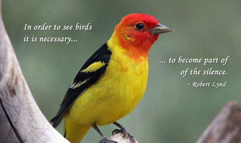 Birds Quotes Images 09