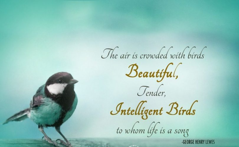 Birds Quotes Images 10