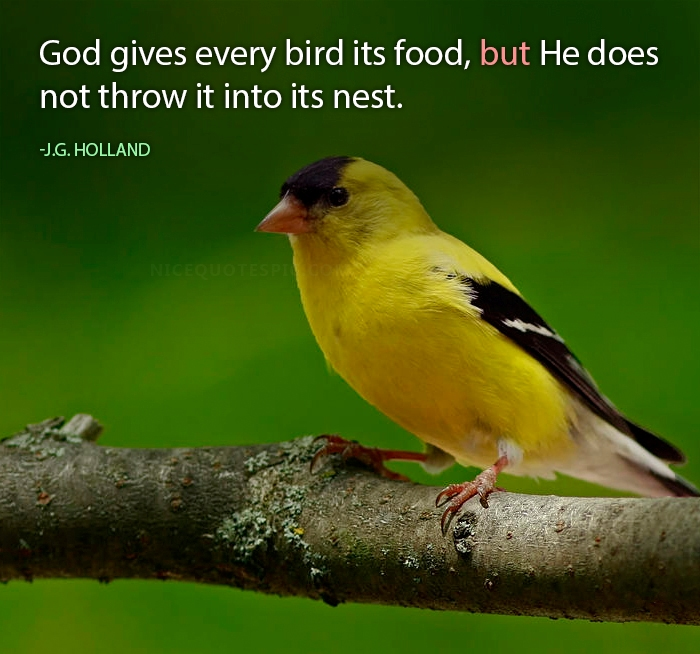 Birds Quotes Images 11