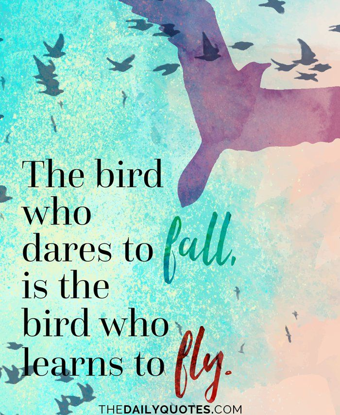 48 Catchy Birds Sayings Quotes About Freedom Of Birds Picsmine