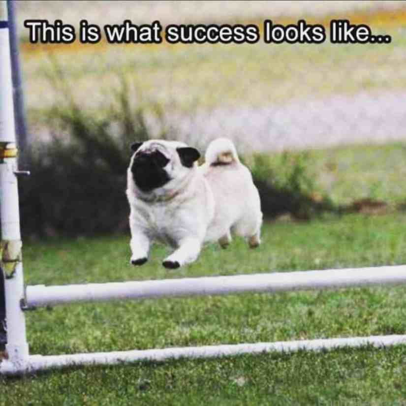 Pug Memes this is what success