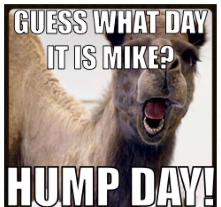 Amazing Hump Day Pictures guess what day it is mike