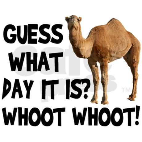 Amazing Hump Day Pictures guess what day it is whoot whooot