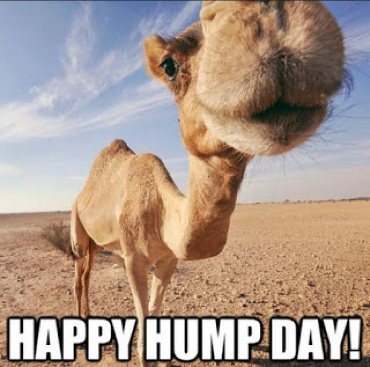 Amazing Hump Day Pictures happy hump day
