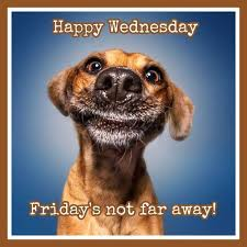 Amazing Hump Day Pictures happy wednesday friday's not far away!