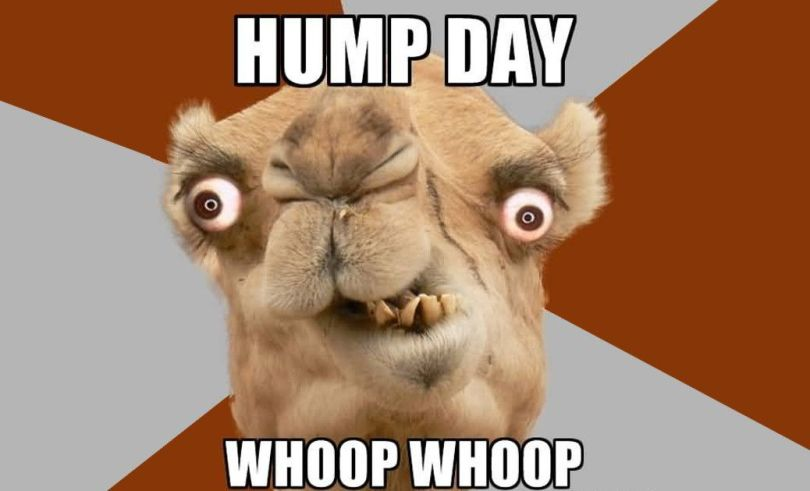 Amazing Hump Day Pictures hump day Whoop whoop