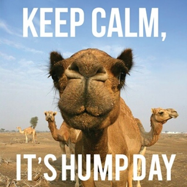 Amazing Hump Day Pictures keep clam, it's hump day