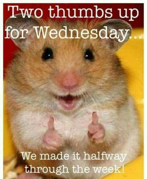 Amazing Hump Day Pictures two thumbs up for wedness day..