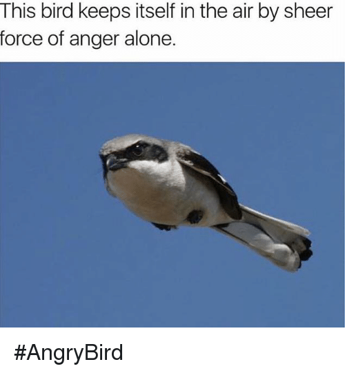 dank bird memes this bird keeps itself in the