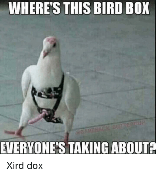 dank bird memes where's this bird box everyone's