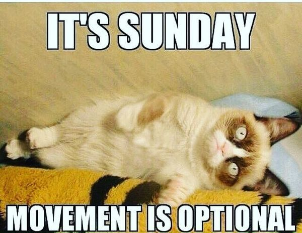 Awesome Sunday Memes With Resting Cute Cat