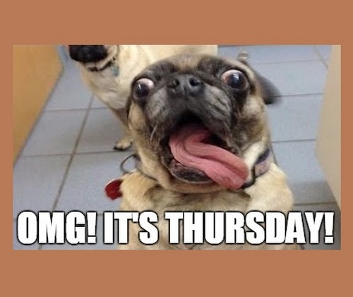 Fabulous Thursday Memes Cute Face Of Pug Dog