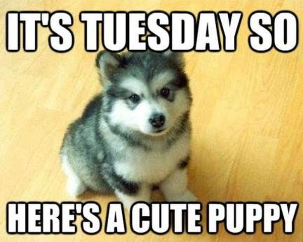 Mind Blowing Tuesday Memes With A Cute Puppy