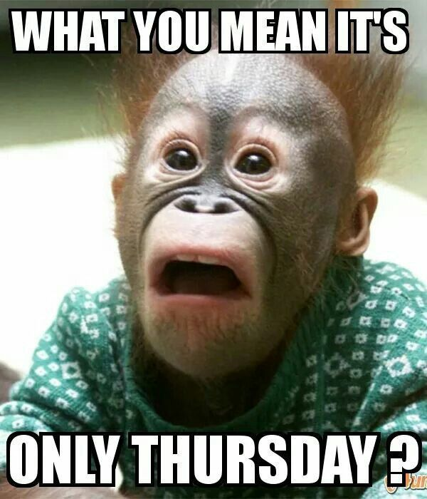 Perfect Thursday Memes With The Monkey's Black Mouth