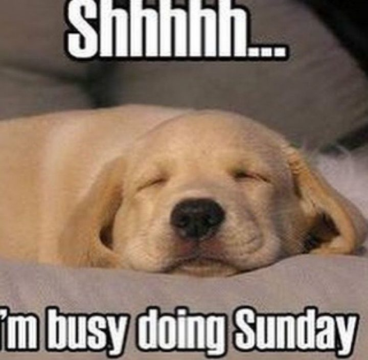 Shhhhhh Im Busy doing Sunday