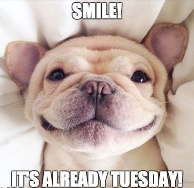 Smile Its already Tuesday
