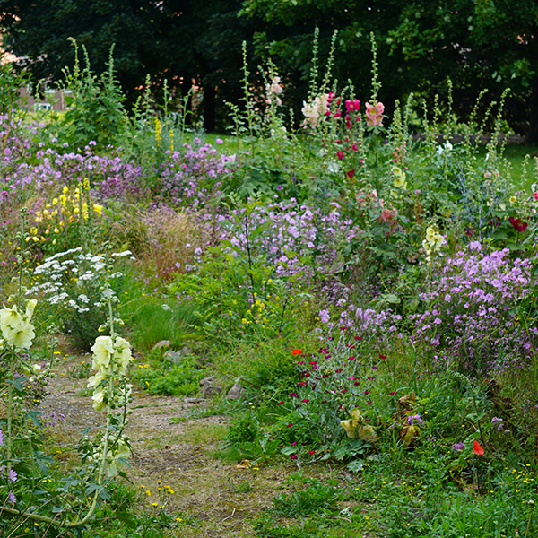 Cottage Garden Meadow