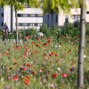 Mediterranean Meadow Seeds