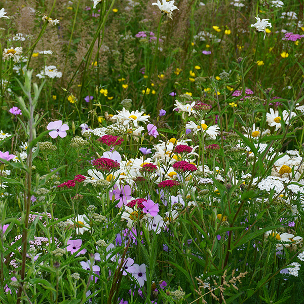 Patchwork Quilt Meadow PM Turf
