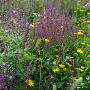 Super Pollinator Meadow
