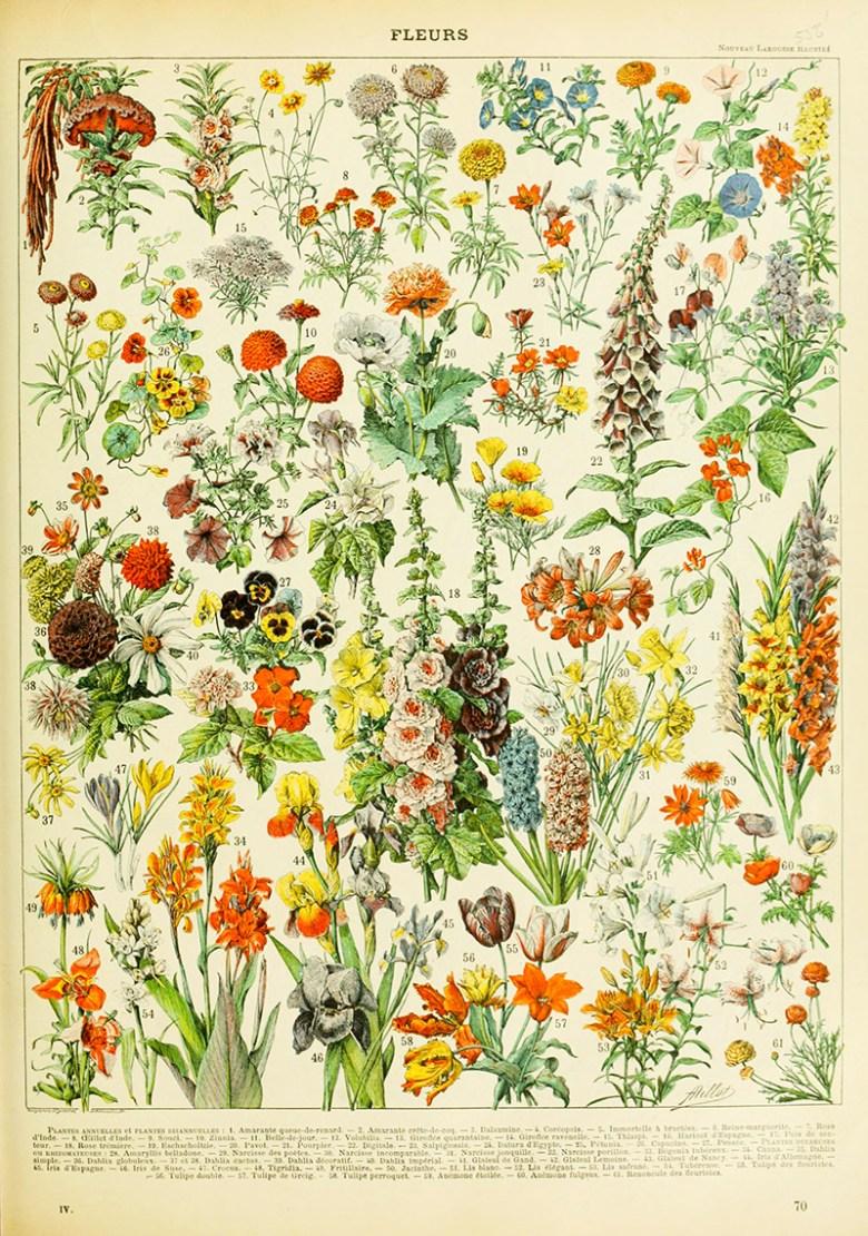 Aldolphe Millet Fleurs free printable