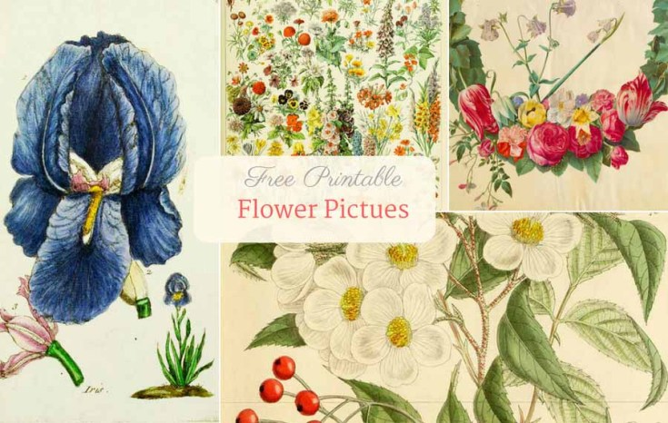 Beautiful Free Vintage Flower Pictures To Download