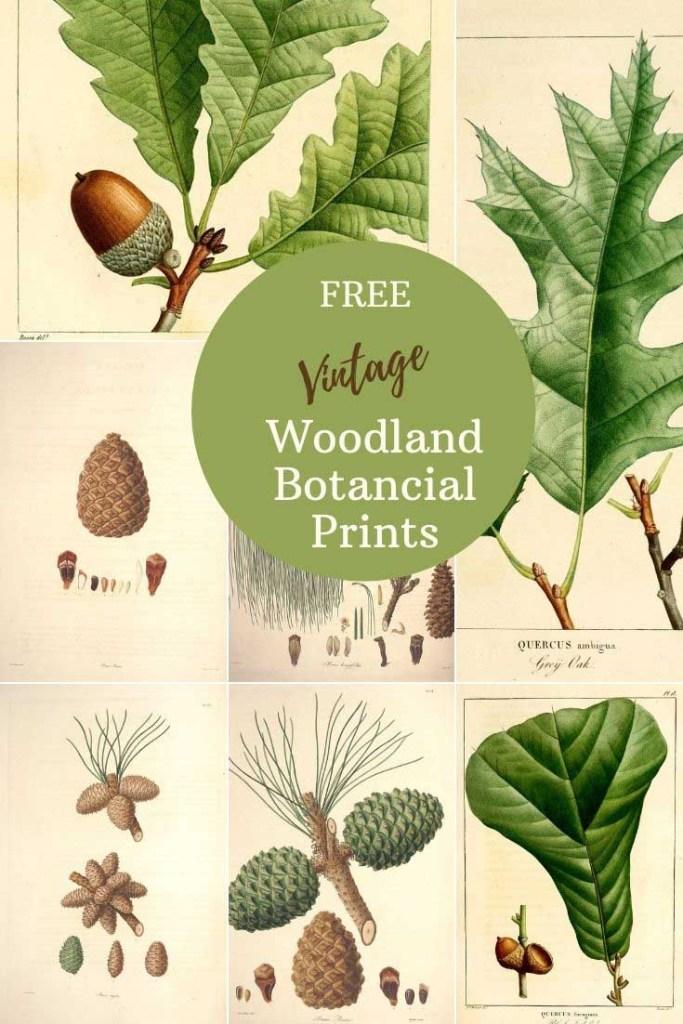 Free Printable woodland botanical prints