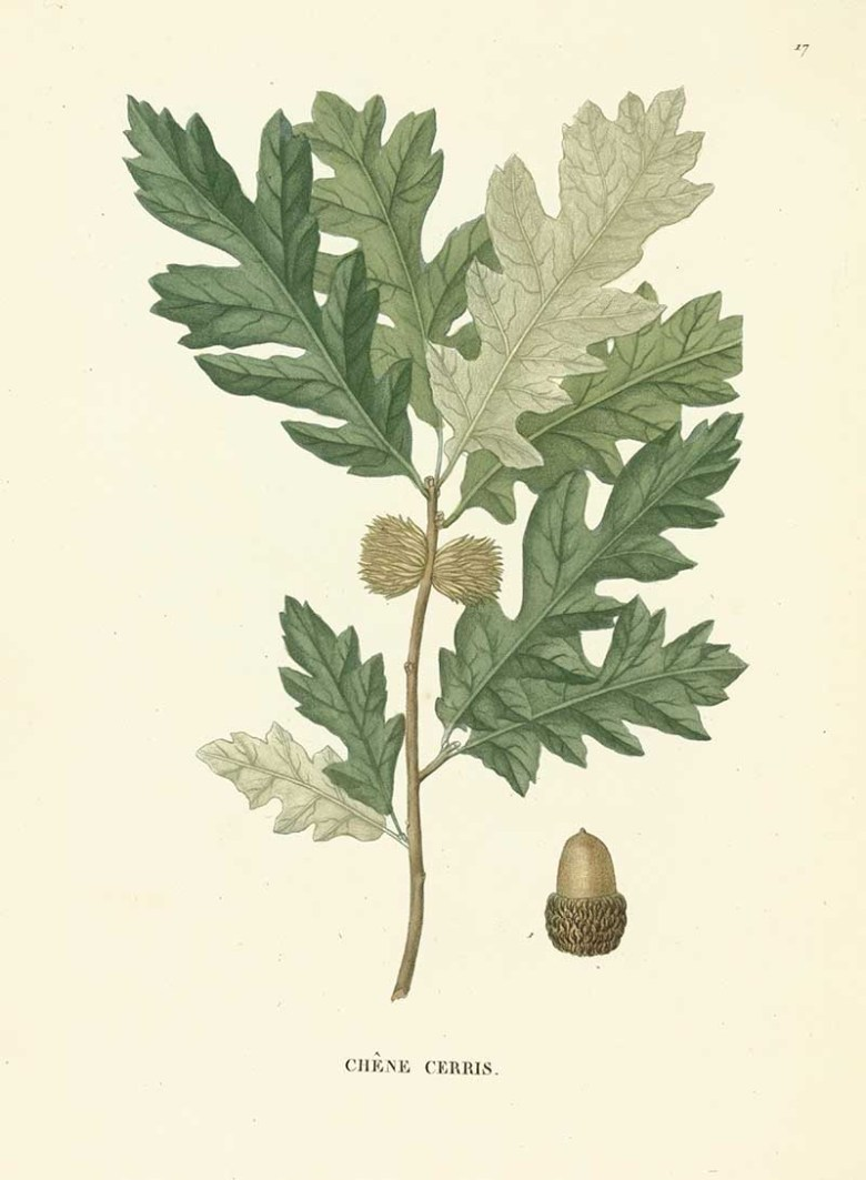 Download Woodland Vintage Botanical Prints For Free - Picture Box Blue