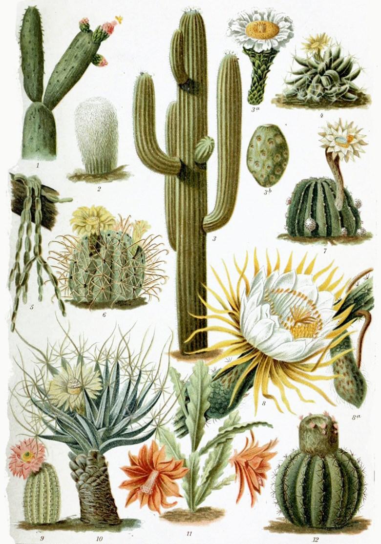 Various_Cactaceae 1892
