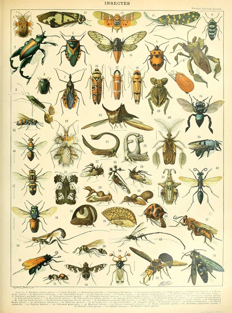 Adolphe Millot Natural History poster of insects