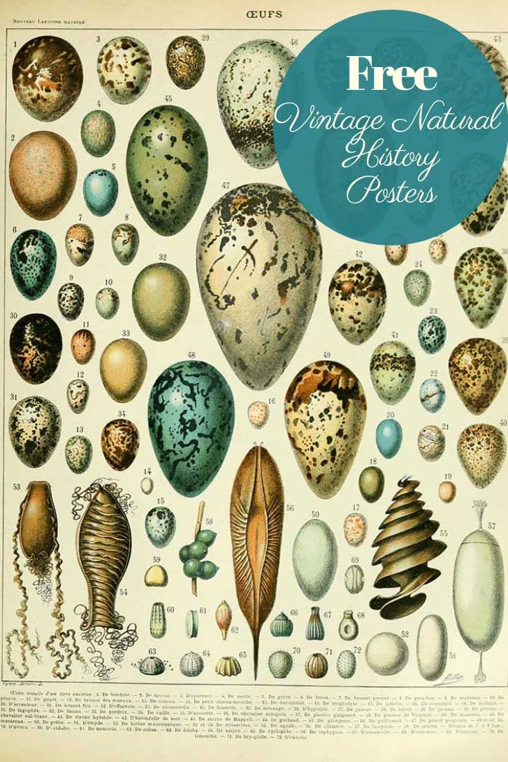 Free vintage natural history posters eggs