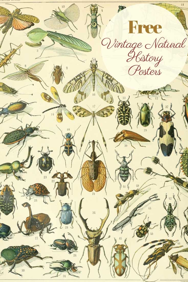 Free vintage natural history posters insects
