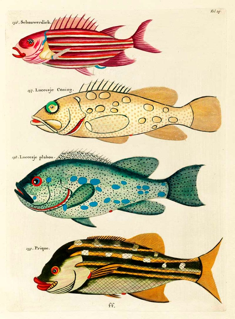 he Schouwerdick and Other Fish 136-139