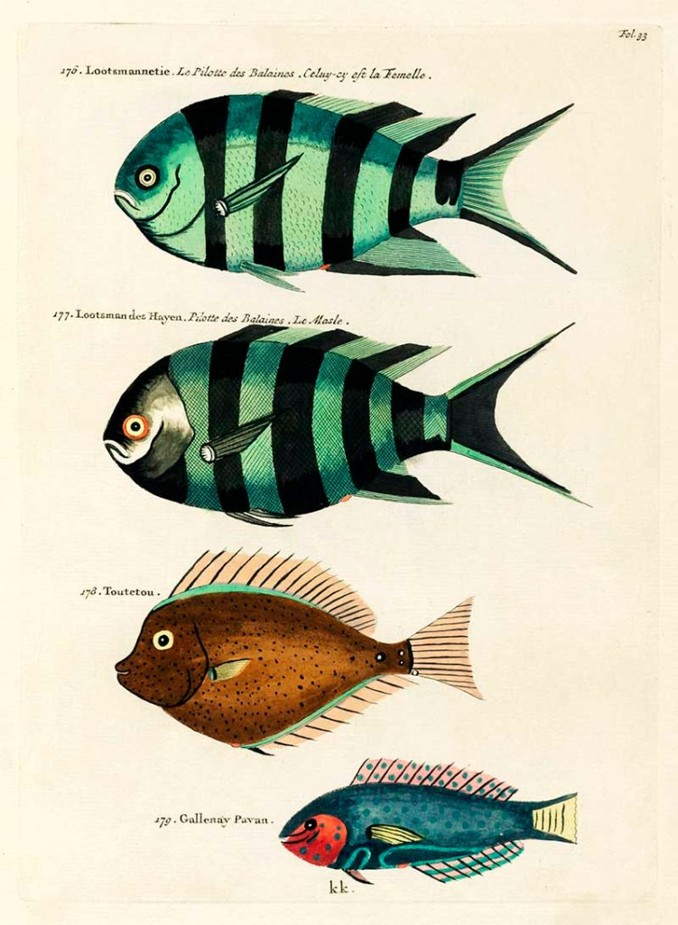 Antique Louis Renard Fish 176-179
