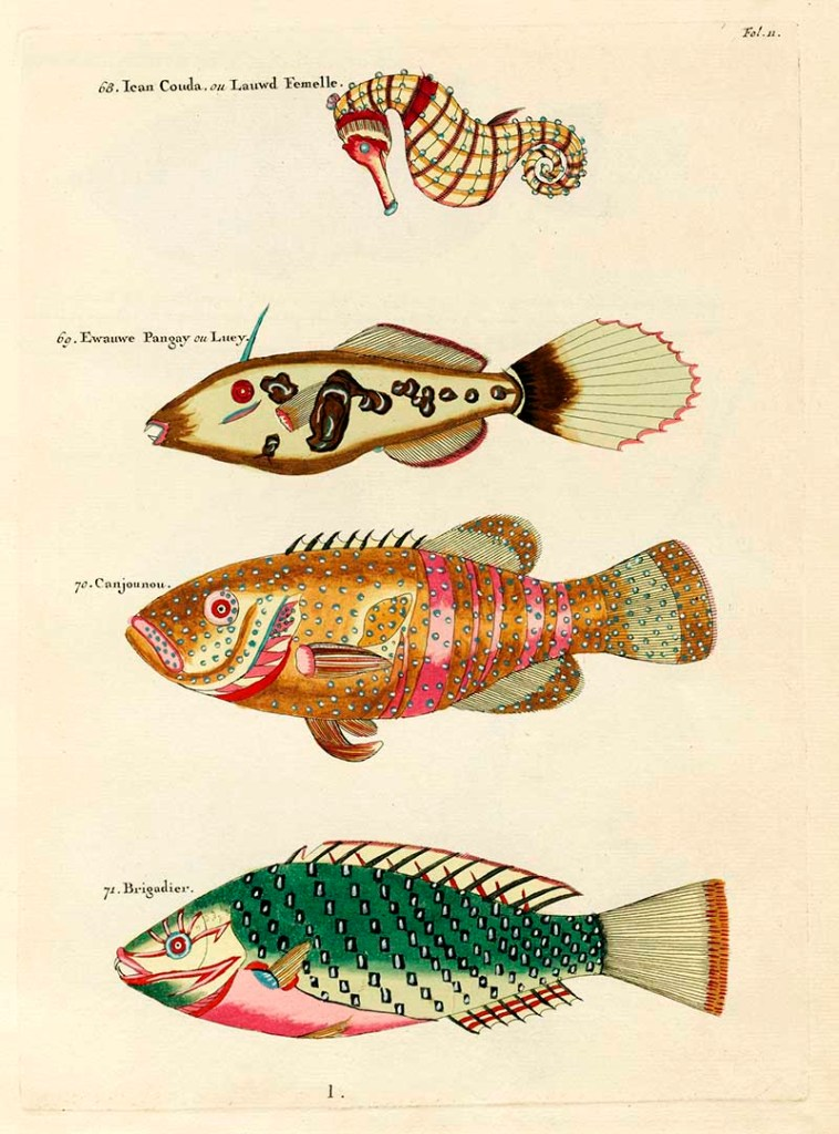 Tropical fish illustrations