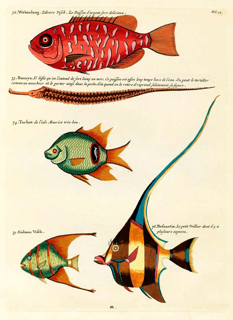 Louis Renard fantastical fish